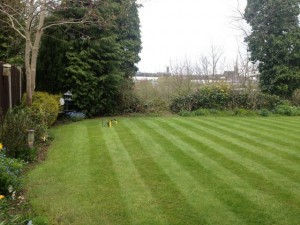 Total_lawn_care_15
